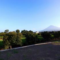 青空、茶畑、そして富士山
