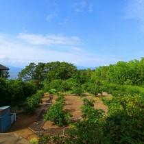 蜜柑畑に囲まれて