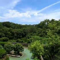 柿田川をお眺める生活