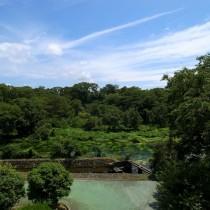 緑いっぱい柿田川湧水公園