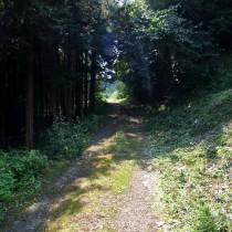 林を抜けた向こうに牧場が