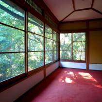 洋室と木漏れ日