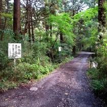 森の中の橋を渡って