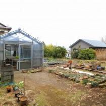 かなり充実した家庭菜園