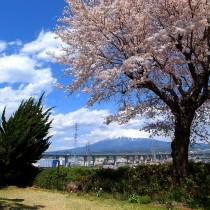 満開の桜、抜ける眺望、その先に富士山